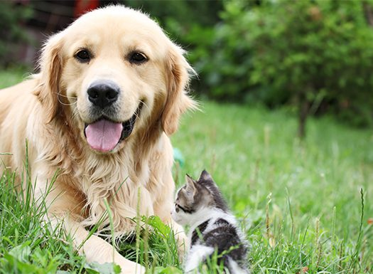 Dog and cat laying in field